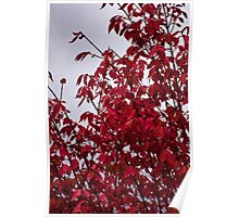 Fire Bush Gray Sky Poster