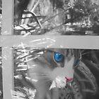 Regelwyn in the Window by pondripple