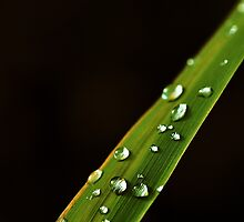 Clear waterdrops on a long leaf by marina63