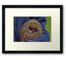 Mrs Tiggywinkle Framed Print