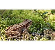 toad in the grass Photographic Print