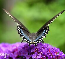 Madame Butterfly by milkayphoto