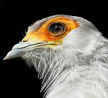 Secretary Bird by Mark Hughes