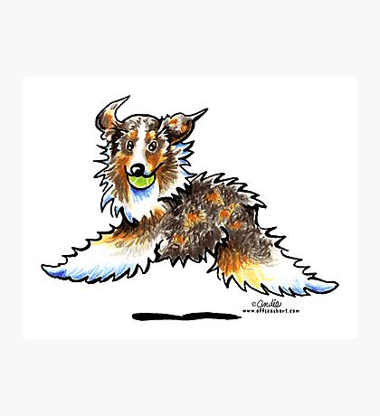 Red Merle Australian Shepherd Let's Play Photographic Print
