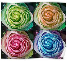Colorful Rose Spirals Poster