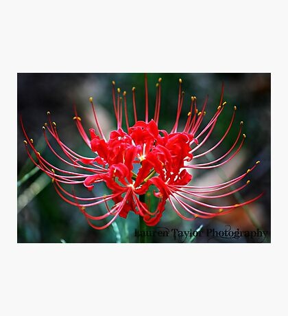 Naked Lady Bloom Photographic Print