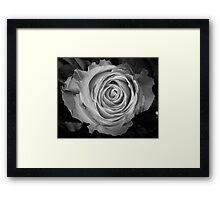 Rose Spirals BW Framed Print