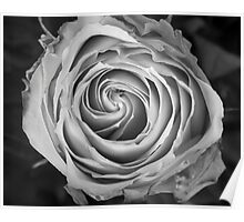 Rose Spiral Black and White Poster