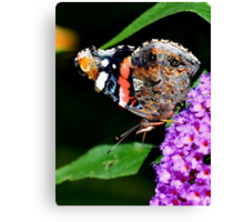Red Admiral Underwing Colour Canvas Print