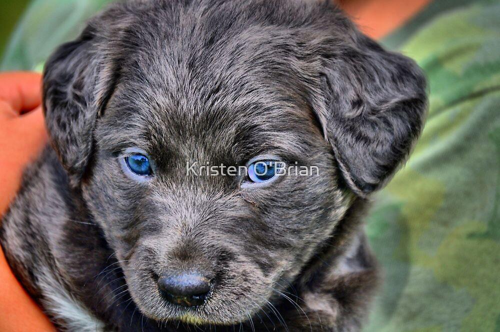 Rescue Puppy by Kristen O'Brian
