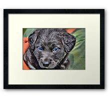 Rescue Puppy Framed Print