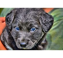 Rescue Puppy Photographic Print