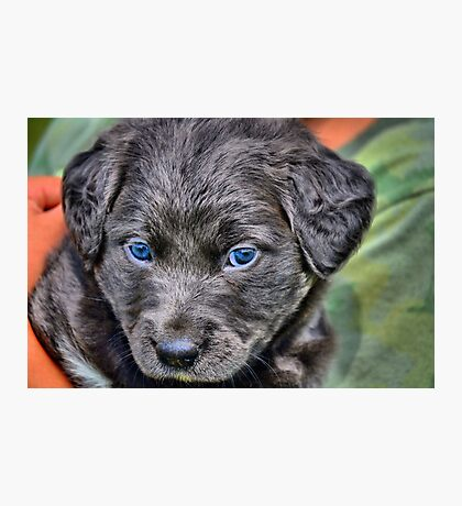 Rescue Puppy Photographic Print