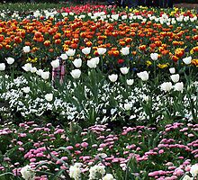 Tulips of White by Bev Pascoe