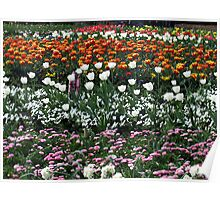 Tulips of White Poster