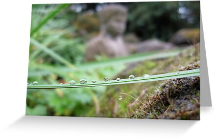 Dew drops all in a line by sammyjo007