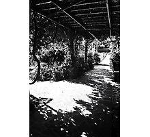 Queen Elizabeth Park,Bermuda Photographic Print