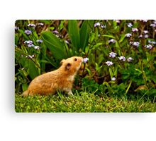 SMELLING THE ROSES Canvas Print