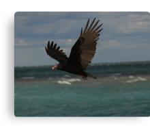 Turkey Vulture In Flight ~ Canvas Print