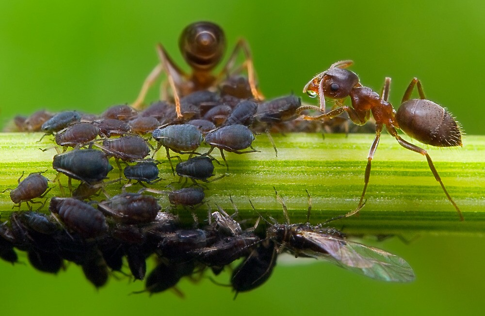 Clever Ants by Keld Bach