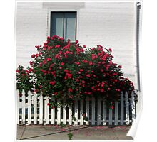 A Splash of Roses Poster