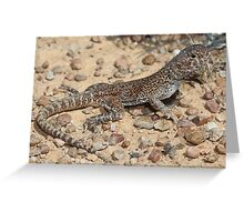 Ctenophurus gibba_Mt Barry_SA Greeting Card