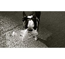 Terrier Water Photographic Print