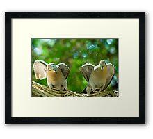 Dove Fight Framed Print