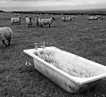 Bath Time by Kevin Hayden