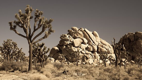 Dramatic Mojave Desert Panorama by Nickolay Stanev