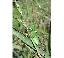 garry grasshopper Photographic Print