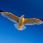 White bird soaring in the blue sky by Zoltán Duray