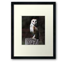 Daylight Hunt Framed Print