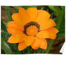 Orange Sunburst Poster