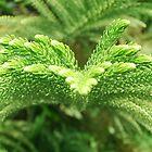 plants by Apollo Carter