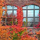 Ivy Framed Windows in Autumn by kkmarais