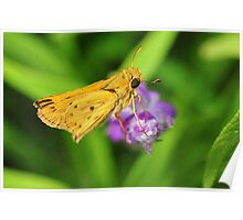 Orange Skipper Butterfly Poster