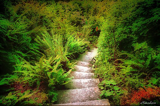 Garden Steps by naturelover