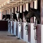 Horses looking out of their stalls by Jeff Knapp