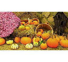 Decorative Pumpkins & Gourds in a Fall Cornucopia Photographic Print