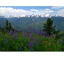 Olympic Mountain Wildflowers Photographic Print