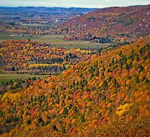 Canopy of Orange Leaves in the Ottawa Valley by Chantal PhotoPix