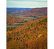 Canopy of Orange Leaves in the Ottawa Valley Photographic Print