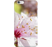 spring 2011 iPhone Case/Skin