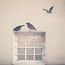 Painted bird over a window in a beige wall by Andreka