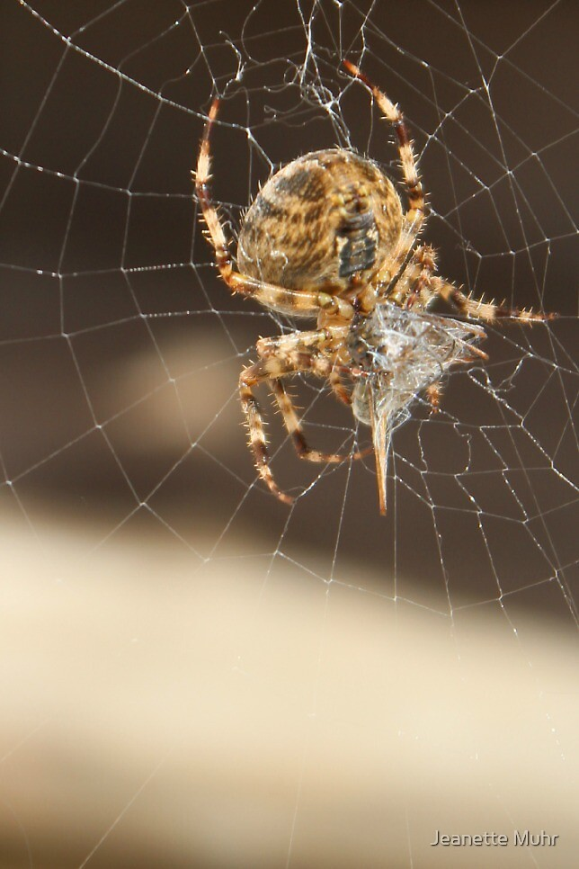 Said the spider to the fly... by Jeanette Muhr