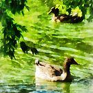 Ducks on a Tranquil Pond by Susan Savad