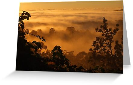 Golden Fog... by debsphotos