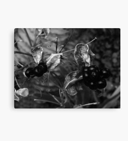 Seeds.. Canvas Print
