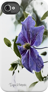 Clematis by Mark  Swindells